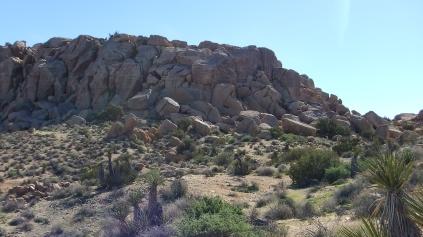 Zebra Cliffs Joshua Tree NP DSCF5691