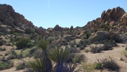 Zebra Cliffs Joshua Tree NP DSCF5692