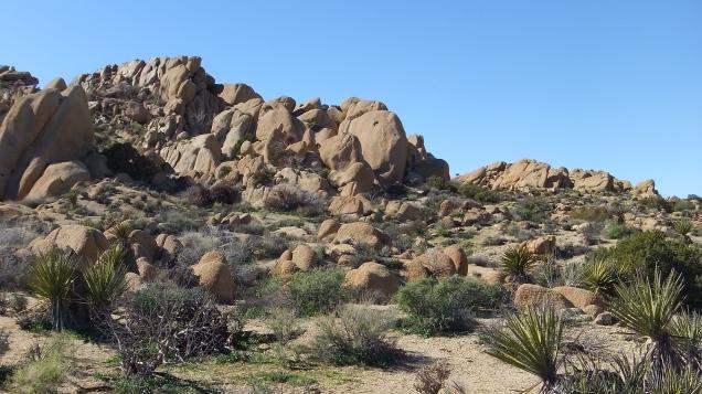 Zebra Cliffs Joshua Tree NP DSCF5694