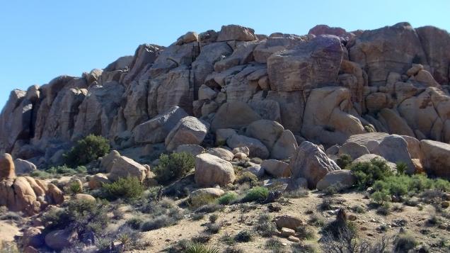Zebra Cliffs Joshua Tree NP DSCF5699