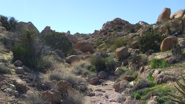 Zebra Cliffs Joshua Tree NP DSCF5709