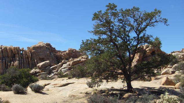 Hidden Valley Campground Outback Joshua Tree NP DSCF5481