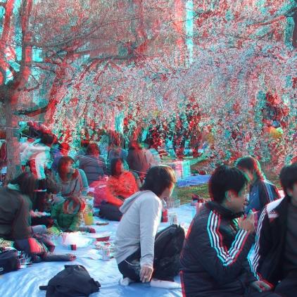 Sendai 2013 Cherry Blossoms 3DA 1080p DSCF0045