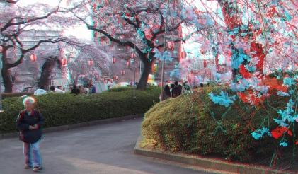 Sendai 2013 Cherry Blossoms 3DA 1080p DSCF0046