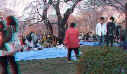 Sendai 2013 Cherry Blossoms 3DA 1080p DSCF0047