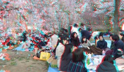 Sendai 2013 Cherry Blossoms 3DA 1080p DSCF0048