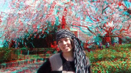 Sendai 2013 Cherry Blossoms 3DA 1080p DSCF0069