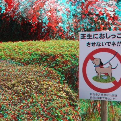 Sendai 2013 Cherry Blossoms 3DA 1080p DSCF0070