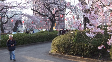 Sendai 2013 Cherry Blossoms DSCF0046