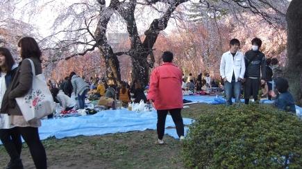 Sendai 2013 Cherry Blossoms DSCF0047