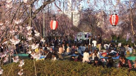 Sendai 2013 Cherry Blossoms DSCF0052
