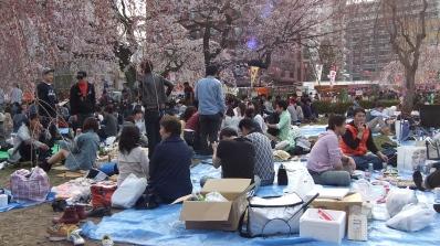 Sendai 2013 Cherry Blossoms DSCF0053
