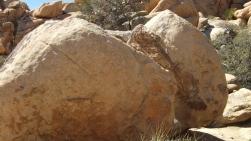 Voices Boulder Joshua Tree NP DSCF5444