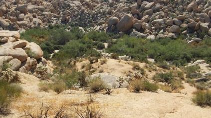 Indian Cove Johnson Canyon DSCF6558