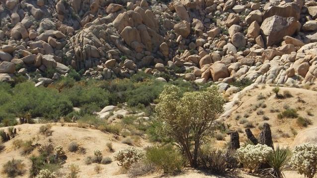 Indian Cove Johnson Canyon DSCF6561