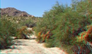 Indian Cove Nature Trail 3DA 1080p DSCF6284
