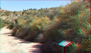 Indian Cove Nature Trail 3DA 1080p DSCF6287