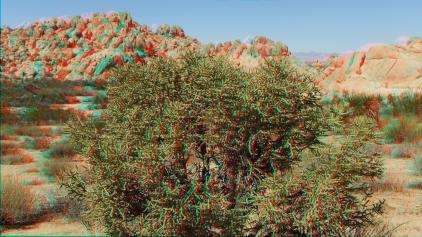 Indian Cove Nature Trail 3DA 1080p DSCF6318