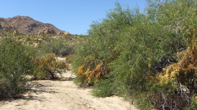 Indian Cove Nature Trail DSCF6284