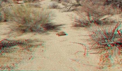Indian Cove Desert Tortoise 1080p 3DA DSCF7204