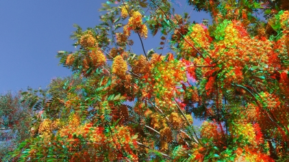 Huntington Australia Garden 3DA 1080p DSCF0276