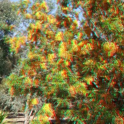 Huntington Australia Garden 3DA 1080p DSCF0280
