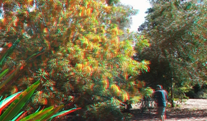 Huntington Australia Garden 3DA 1080p DSCF0282