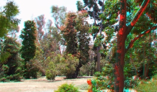 Huntington Australia Garden 3DA 1080p DSCF1597