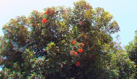 Huntington Australia Garden 3DA 1080p DSCF1604