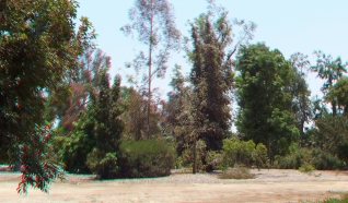 Huntington Australia Garden 3DA 1080p DSCF1618
