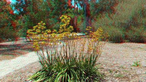 Huntington Australia Garden 3DA 1080p DSCF1619