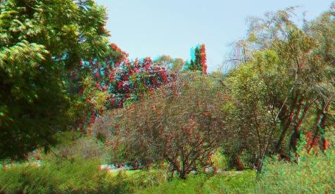Huntington Australia Garden 3DA 1080p DSCF1623