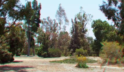 Huntington Australia Garden 3DA 1080p DSCF1627