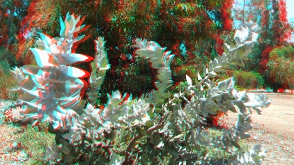 Huntington Australia Garden 3DA 1080p DSCF1644