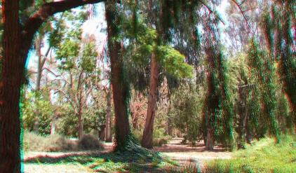 Huntington Australia Garden 3DA 1080p DSCF1685