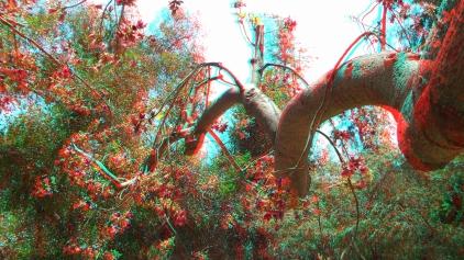 Huntington Australia Garden 3DA 1080p DSCF1704