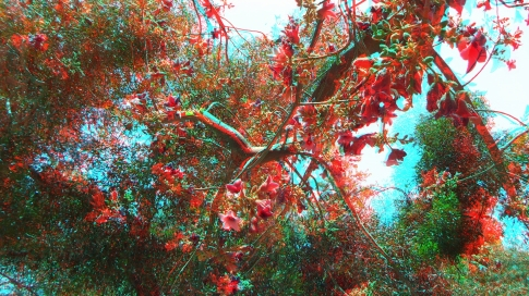 Huntington Australia Garden 3DA 1080p DSCF1707