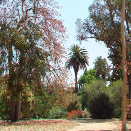 Huntington Australia Garden 3DA 1080p DSCF1718