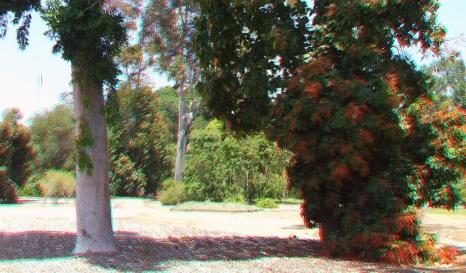 Huntington Australia Garden 3DA 1080p DSCF1720