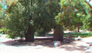 Huntington Australia Garden 3DA 1080p DSCF1733