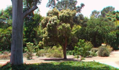 Huntington Australia Garden 3DA 1080p DSCF1747