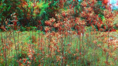 Huntington Australia Garden 3DA 1080p DSCF1765