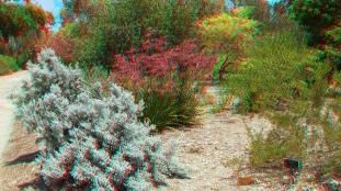 Huntington Australia Garden 3DA 1080p DSCF1829