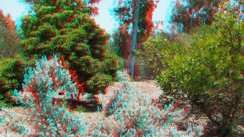 Huntington Australia Garden 3DA 1080p DSCF1832