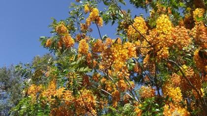 Huntington Australia Garden DSCF0276