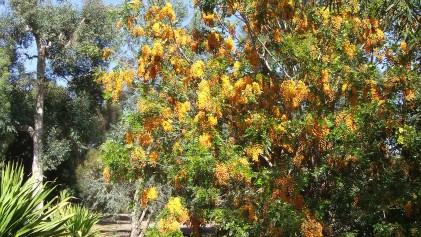 Huntington Australia Garden DSCF0280