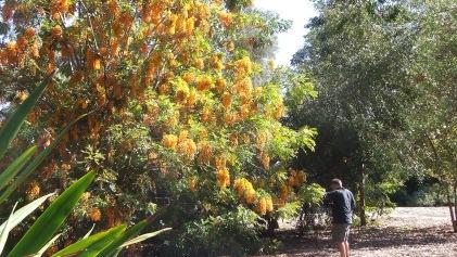 Huntington Australia Garden DSCF0282