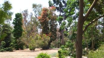 Huntington Australia Garden DSCF1597