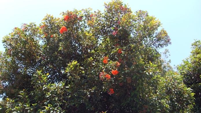 Huntington Australia Garden DSCF1604