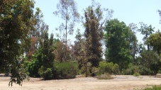 Huntington Australia Garden DSCF1618